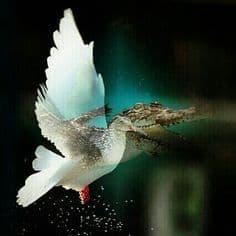 Dove Spirit Animal