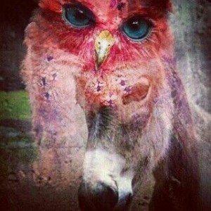 owl vs donkey
