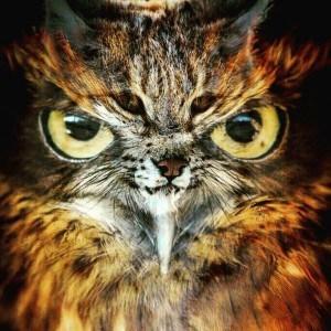 hawk vs lynx