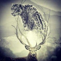 jaguar vs deer
