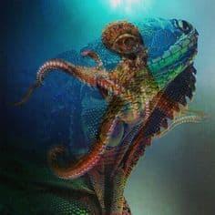 lizzard vs octopus