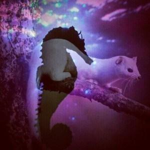 seahorse vs weasel
