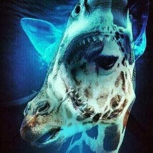 shark vs giraffe