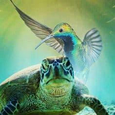 turtle vs hummingbird